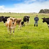 Beston Dairy Farm Advertising Photography