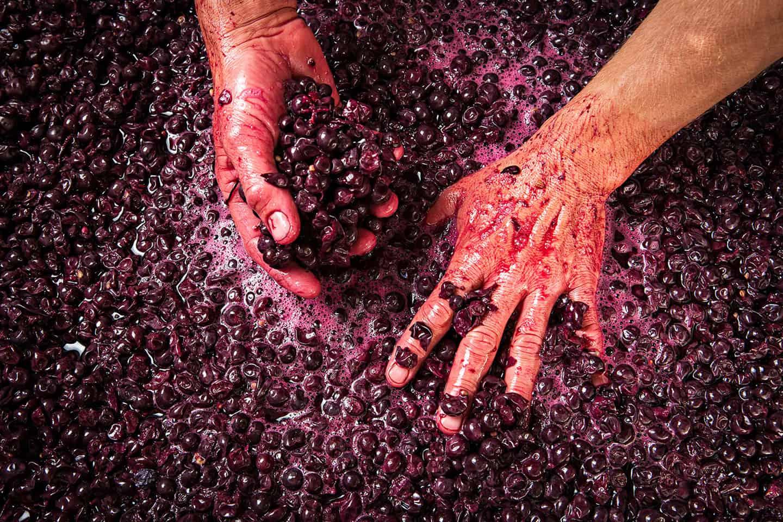 Ngeringa Winery Photography Advertising